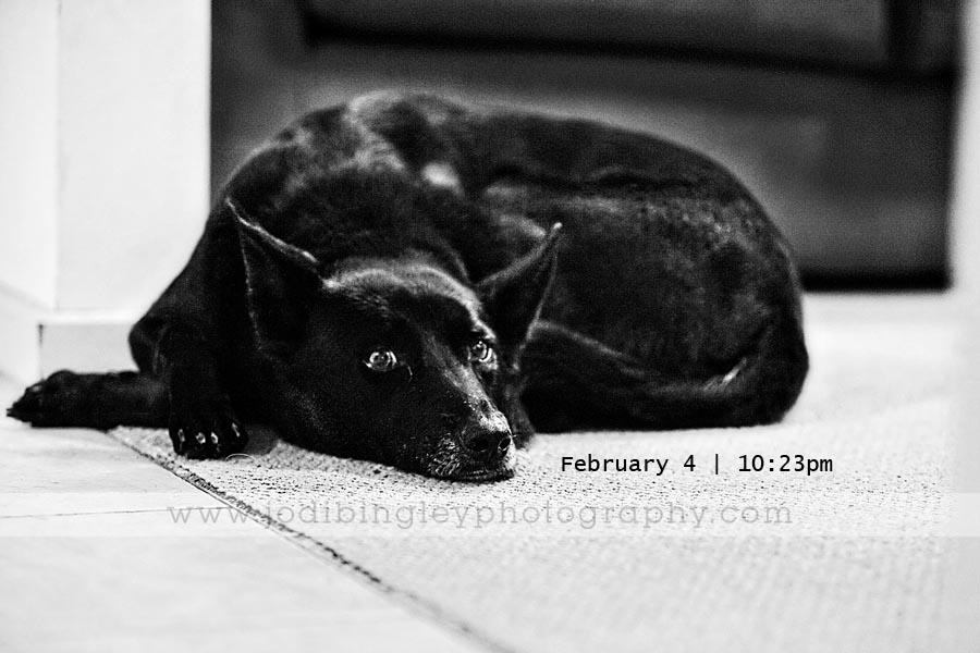 Feb 4_2010